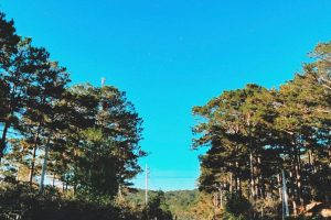 Đà Lạt – Cảm xúc trong một ngày nhiều gió
